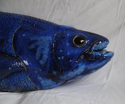 fisk blå